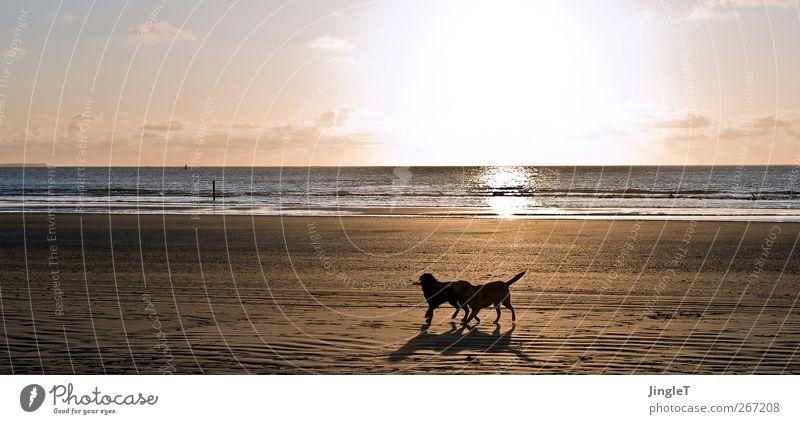 goldene zeiten Hund Natur Meer Strand Tier schwarz Umwelt Landschaft Leben Spielen Frühling Bewegung Wellen laufen Insel