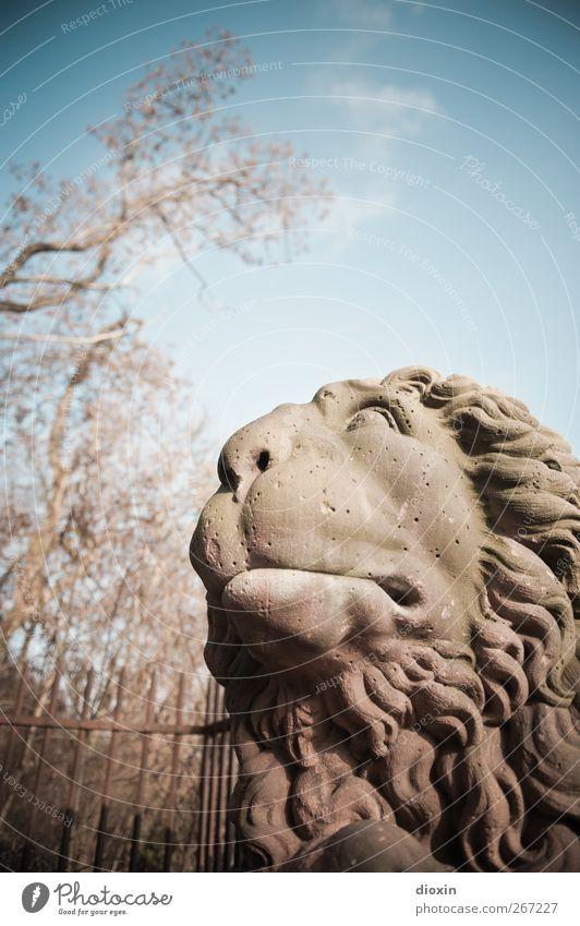 Der Löwe wär gerne los! Baum Tier Stein Kunst Park Denkmal Skulptur Sehenswürdigkeit bewegungslos Bildhauerei Wiesbaden Löwenmähne Löwenkopf