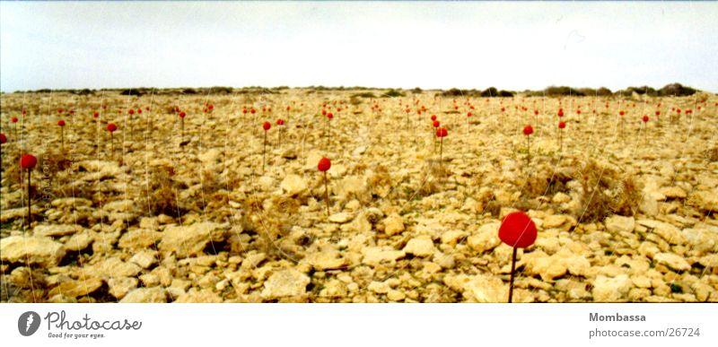 Landart-Blumen in Wüste rot Stein Landschaft Kunst groß Freizeit & Hobby beige Panorama (Bildformat) Formentera Land Art