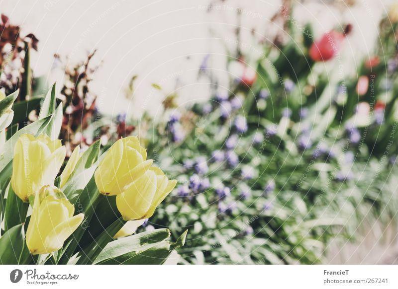 Frühlingsblumen Natur grün schön Pflanze rot Blume Blatt Erholung gelb Gras Freiheit Blüte Garten träumen natürlich