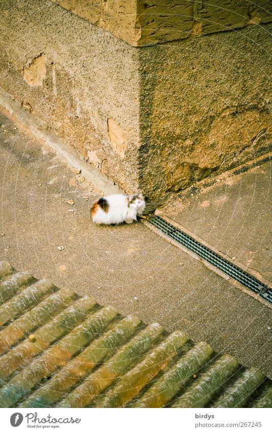 Schmoritz... Haus Mauer Wand Hausecke Ecke Vordach Gasse Katze 1 Tier Blick authentisch niedlich schön Wachsamkeit Gelassenheit Freiheit einzigartig Stadt