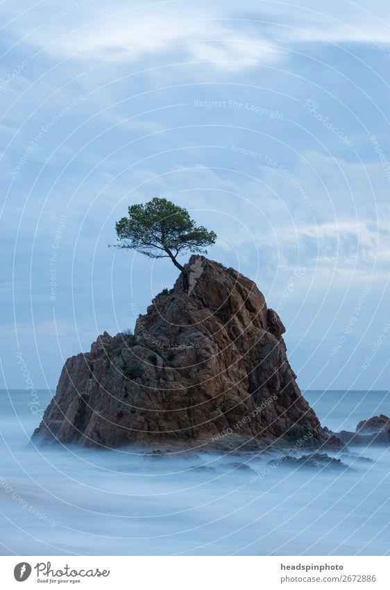 Langzeitbelichtung von Baum auf einem Felsen im Meer Natur Landschaft Urelemente Wasser Wolken Wellen Küste Strand Insel Tossa de Mar Spanien ruhig