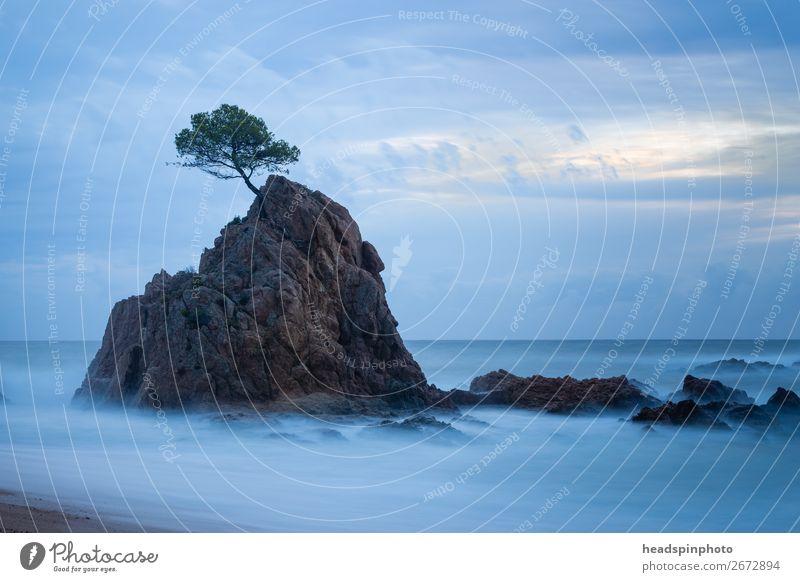 Langzeitbelichtung von Baum auf einem Felsen im Meer Ferien & Urlaub & Reisen Tourismus Ausflug Abenteuer Freiheit Strand Insel Wellen Umwelt Natur Landschaft
