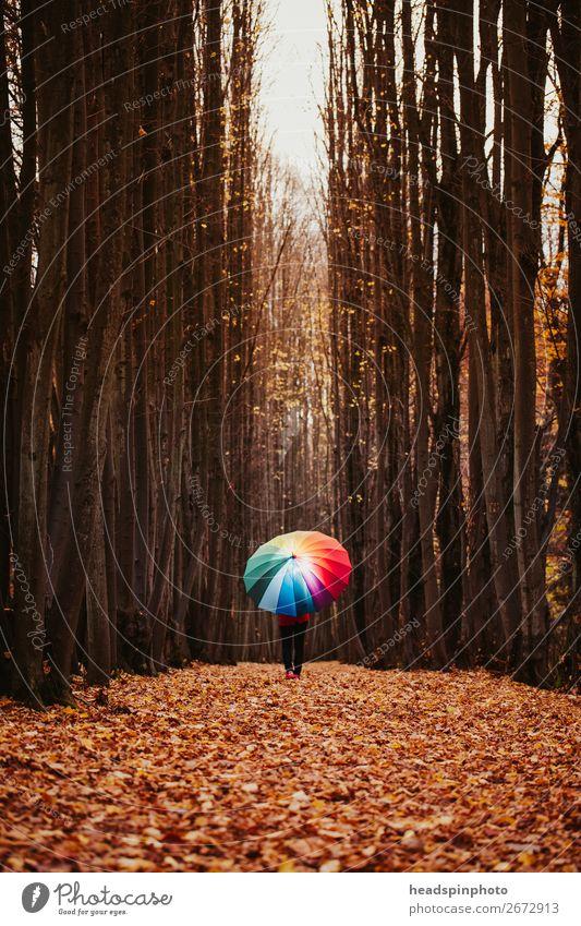 Allee mit Herbstlaub und Frau mit buntem Regenschirm harmonisch Wohlgefühl Erholung wandern feminin Junge Frau Jugendliche Erwachsene 1 Mensch Umwelt Natur