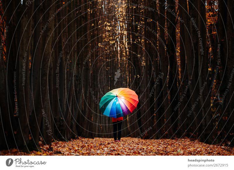 leuchtender Regenbogen- Regenschirm im dunklen Herbstwald feminin 1 Mensch Landschaft Baum Blatt Wald wandern braun gelb gold Freude Glück mehrfarbig