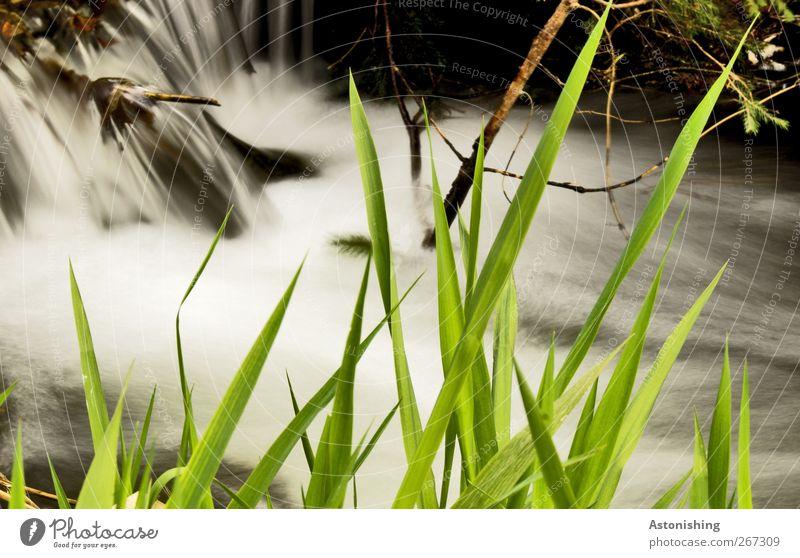zackig Umwelt Natur Landschaft Pflanze Wasser Frühling Wetter Gras Sträucher Moos Wiese Flussufer Wasserfall nass Geschwindigkeit grün schwarz weiß Ast fließen