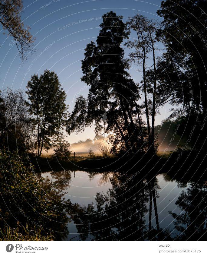 Schleierhafter Morgen Umwelt Natur Landschaft Pflanze Wolkenloser Himmel Horizont Herbst Schönes Wetter Nebel Baum Sträucher Flussufer leuchten kalt