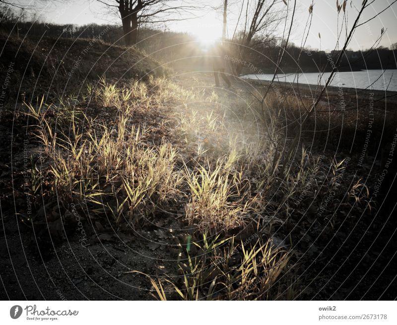 Unterbelichtet Frau Erwachsene Beine Fuß Umwelt Natur Landschaft Pflanze Wasser Wolkenloser Himmel Horizont Sonne Frühling Schönes Wetter Baum Gras Sträucher