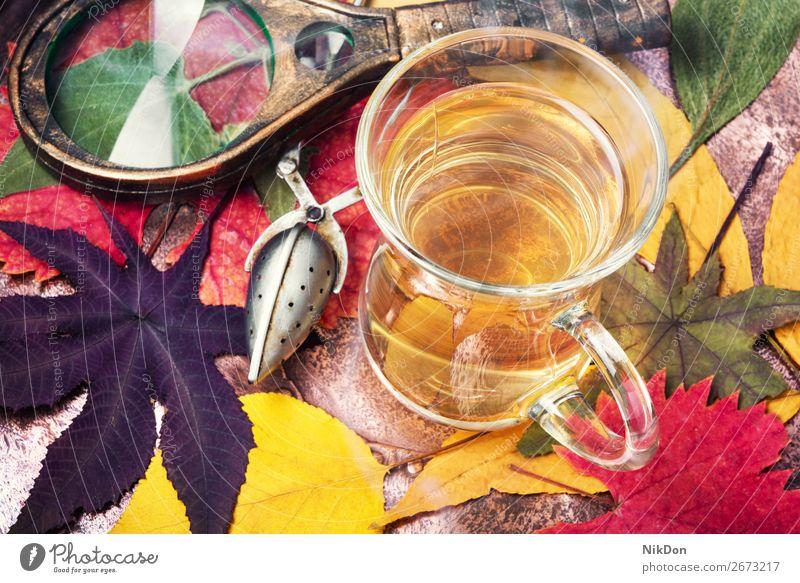 Tasse Tee mit Herbstblättern Herbarium Lupe Saison fallen Hintergrund trinken Tisch Blatt farbenfroh gelb Becher trocknen Stillleben Botanik gepresst Getränk
