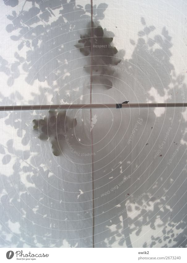 Kreuzgang Baum Blatt Zweige u. Äste Laubbaum Zelt Zeltplane Wetterschutz Naht berühren schemenhaft Andeutung Sommer Farbfoto Gedeckte Farben Innenaufnahme