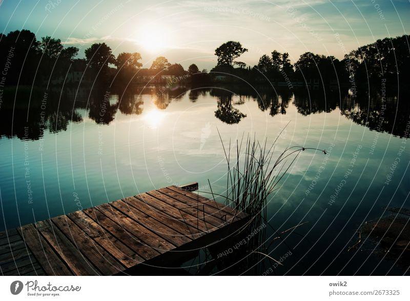 Stegreif Umwelt Natur Landschaft Pflanze Wasser Himmel Wolken Horizont Sonne Schönes Wetter Baum Sträucher Küste Seeufer Bernsdorfer See Holz leuchten ruhig