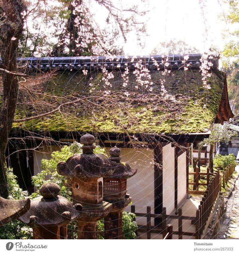 Karl träumt. Natur weiß grün Ferien & Urlaub & Reisen Baum Pflanze ruhig Architektur Frühling Holz Religion & Glaube Stein braun ästhetisch Dach Japan