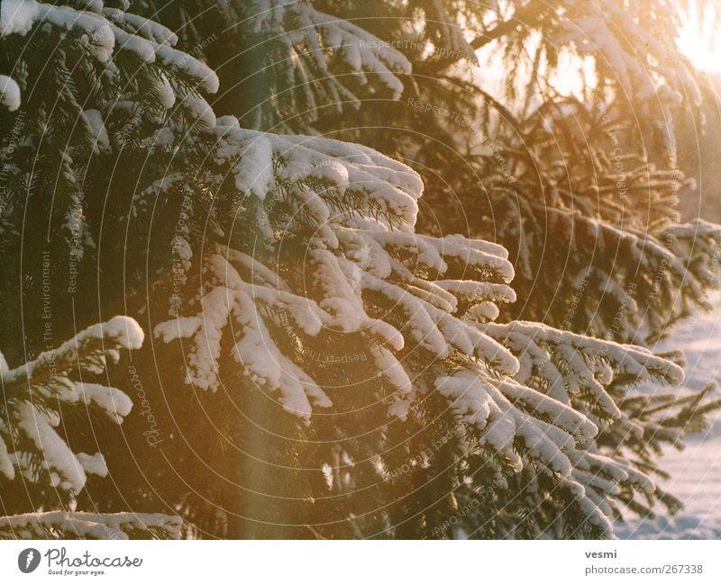 Winter Natur Ferien & Urlaub & Reisen Baum Erholung Wald kalt Umwelt gelb natürlich Schnee braun Schneefall Freizeit & Hobby Eis Idylle