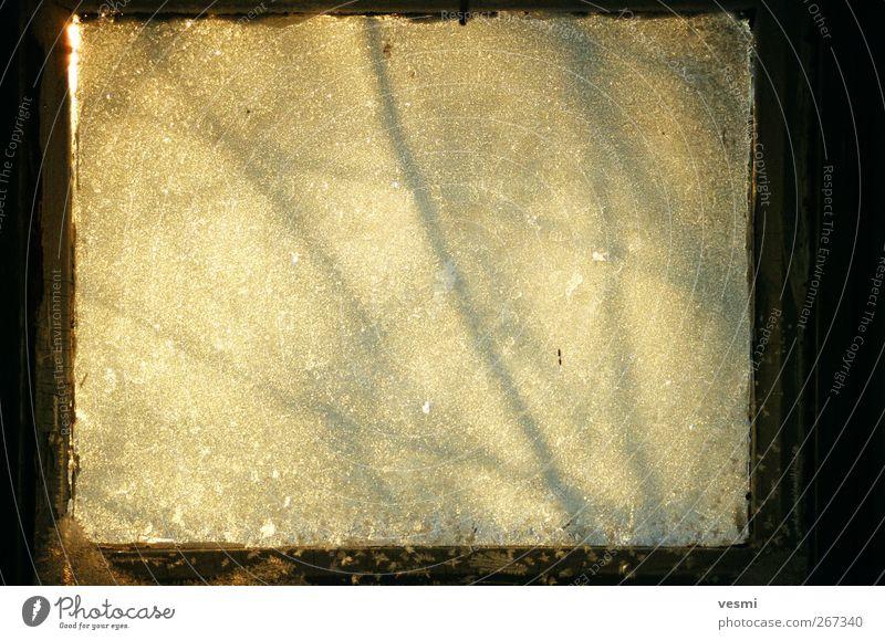 Frostfenster gelb kalt Eis braun Hintergrundbild Glas Frost Ast Quadrat kühlen