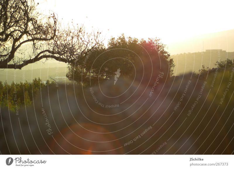 summer harmonisch ruhig Ferne Sommer Umwelt Landschaft Himmel Sonnenlicht Schönes Wetter Baum Sträucher Wiese Berge u. Gebirge ästhetisch Beginn Erholung
