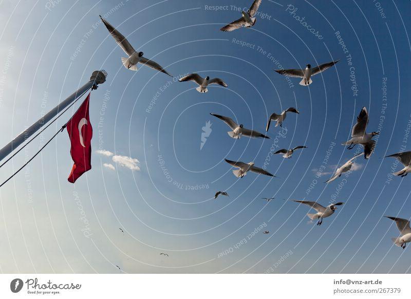 Die Flagge Himmel Natur blau Tier Umwelt Vogel frei Flügel