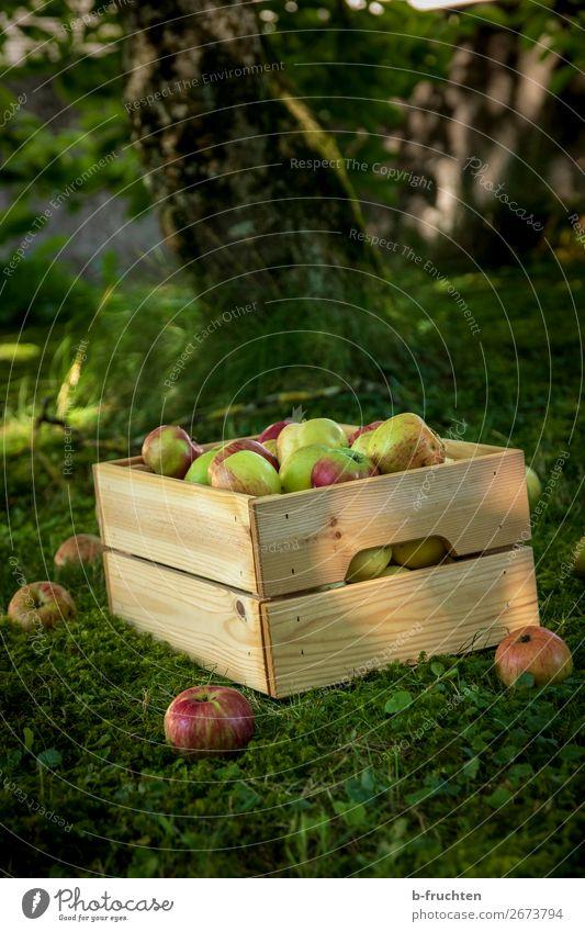 Streuobstwiese, Apfelernte Lebensmittel Frucht Bioprodukte Vegetarische Ernährung Gesunde Ernährung Gartenarbeit Landwirtschaft Forstwirtschaft Kasten