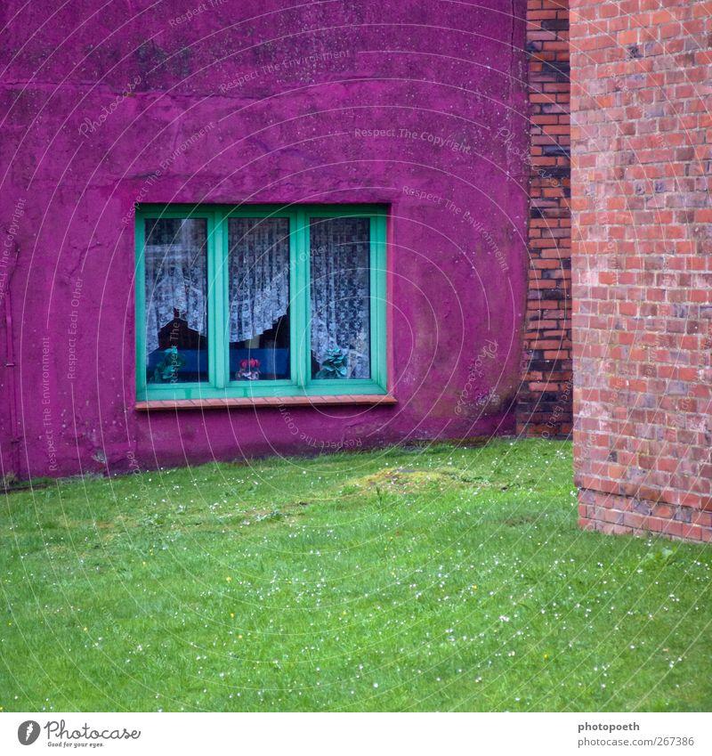 Farbecke grün Haus Fenster Wiese Stein Garten Mauer orange rosa violett Sportrasen Gardine zyan Backsteinwand Blumenvase