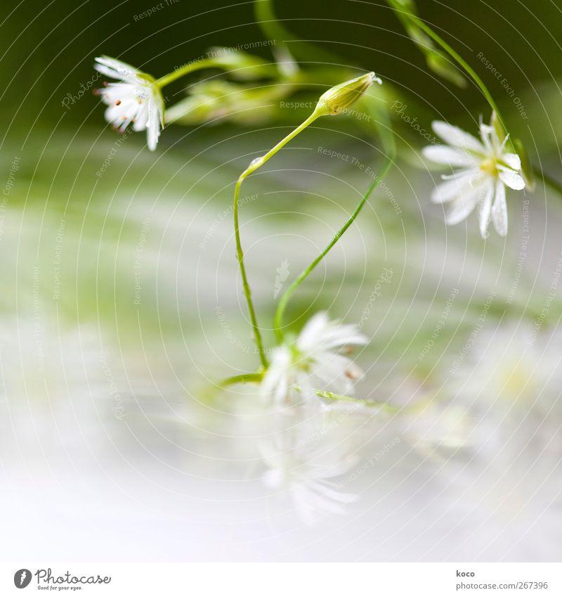 ikebana Natur Pflanze Frühling Sommer Schönes Wetter Blume Blatt Blüte Grünpflanze Netzwerk Tropfen berühren Blühend Wachstum dünn authentisch elegant
