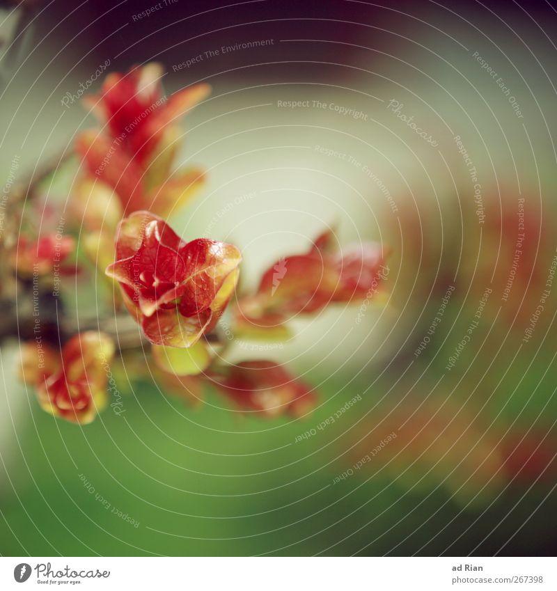 Blumenmakro... Natur Baum Pflanze Frühling Blühend