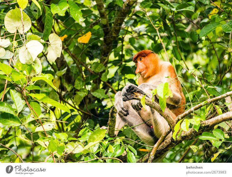 orang belanda;) Ferien & Urlaub & Reisen Baum Tier Blatt Ferne Tourismus außergewöhnlich Freiheit Ausflug wild Wildtier Abenteuer fantastisch Freundlichkeit