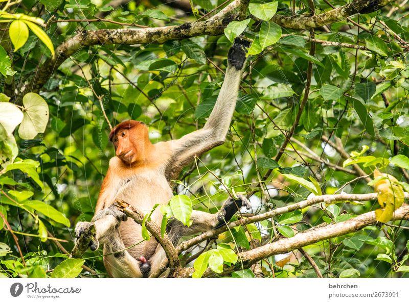 wochenende - schönes abhängen! Ferien & Urlaub & Reisen Baum Erholung Tier Blatt Ferne lustig Tourismus außergewöhnlich Freiheit Ausflug Wildtier Abenteuer