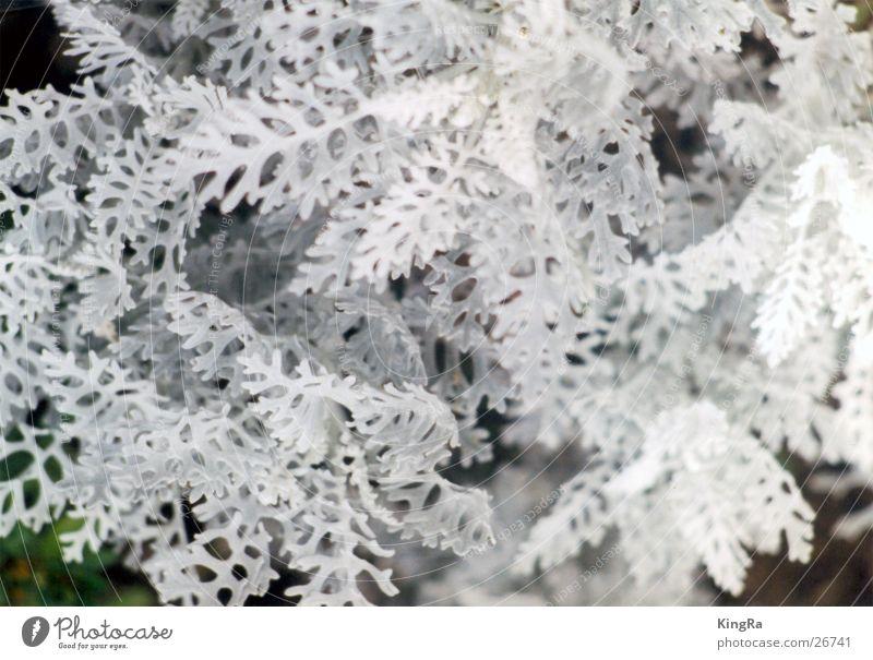 SchneeSchwamm weiß Pflanze klein nah Pilz Flechten