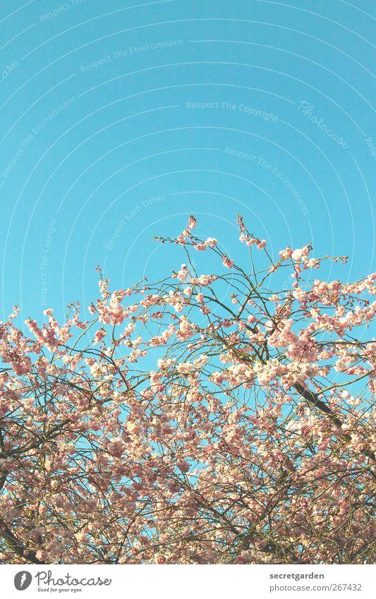 cold north meets warm south Umwelt Natur Wolkenloser Himmel Sonnenlicht Frühling Sommer Schönes Wetter Pflanze Sträucher Blüte Garten Park Kitsch Krimskrams