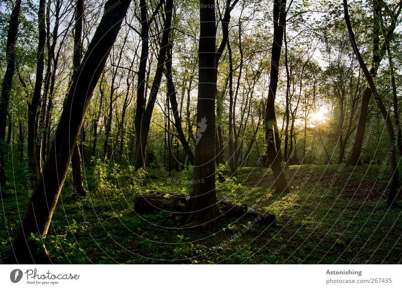 Abend im Wald Umwelt Natur Landschaft Himmel Sonne Frühling Sommer Wetter Schönes Wetter Wärme Pflanze Baum Gras Sträucher Moos Blatt Grünpflanze Garten Park
