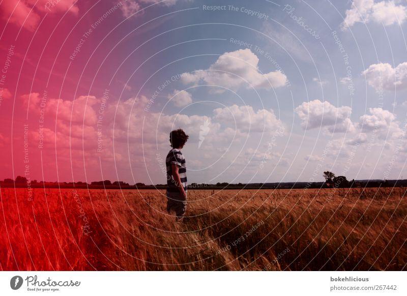 Retro Field Natur Baum rot Wolken Einsamkeit Landschaft Gefühle Glück Feld frei Fröhlichkeit retro T-Shirt Filmmaterial einzeln Aussicht