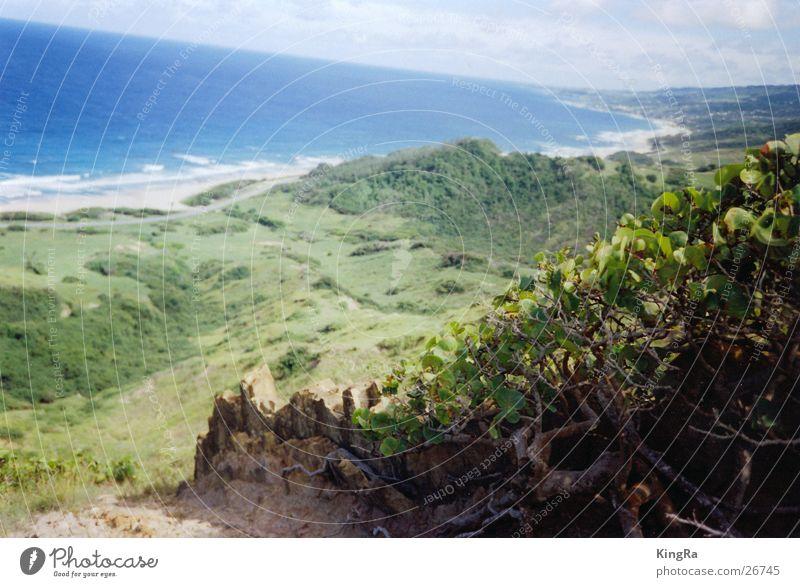 Barbados 1 grün Meer Südamerika Pflanze Felsen Stein blau Aussicht Tal