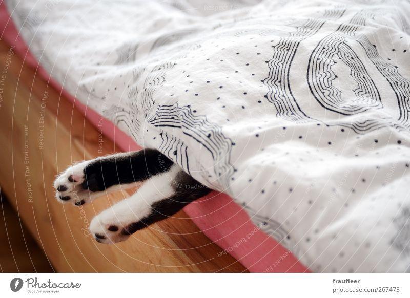 Pfoten Bett Schlafzimmer Fuß Tier Haustier Katze 1 Holz beobachten liegen schlafen braun rosa schwarz weiß Tierliebe Erschöpfung Erholung Langeweile