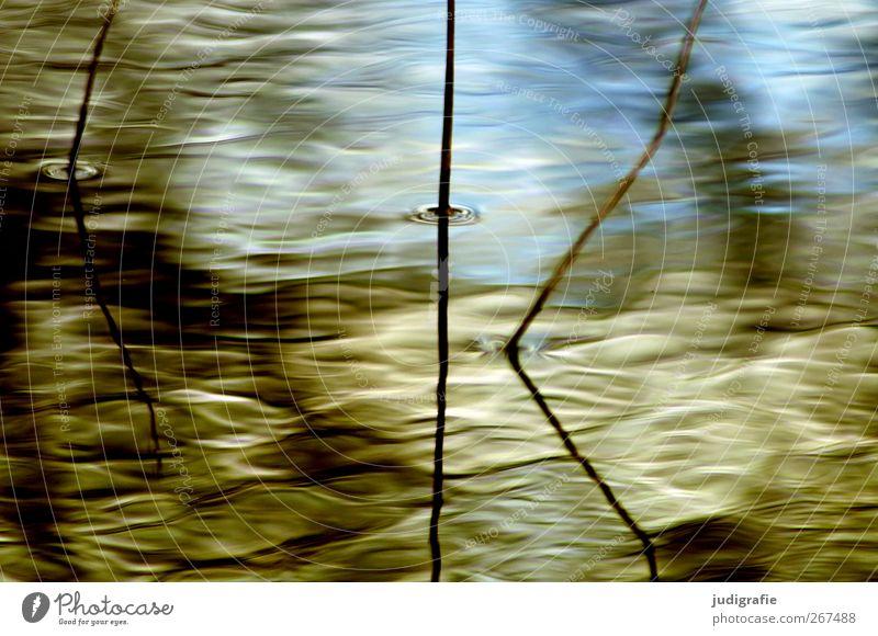 Sonntags Umwelt Natur Pflanze Wasser Wellen Seeufer Teich Wachstum nass natürlich Stimmung Schilfrohr Halm zart Wasseroberfläche Farbfoto Außenaufnahme abstrakt