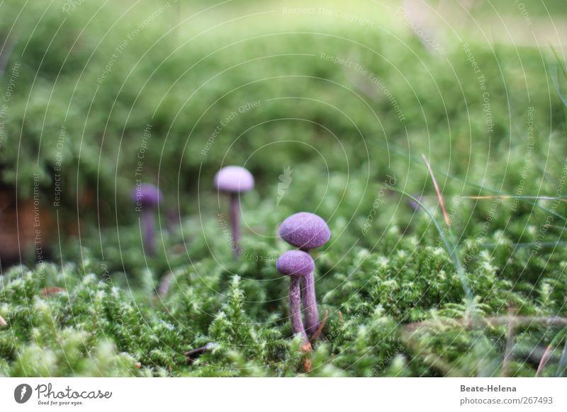 Stramm gestanden! Natur grün schön Pflanze Umwelt Ernährung Lebensmittel ästhetisch Wachstum violett Gemüse Pilz Moos exotisch Kissen Waldboden