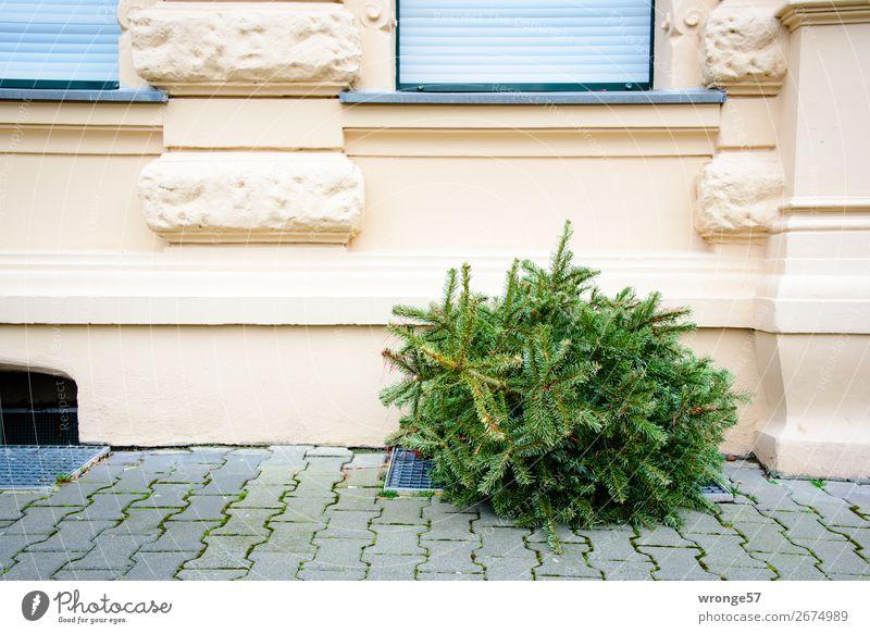 Weihnachten ist durch Baum Nadelbaum Weihnachtsbaum Fassade Fenster alt Stadt grau grün Tanne entsorgt entsorgen Weihnachtsdekoration Straße Bürgersteig Haus