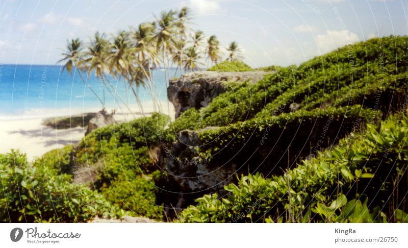 versteckter Strand Palme grün Meer türkis Südamerika Wasser
