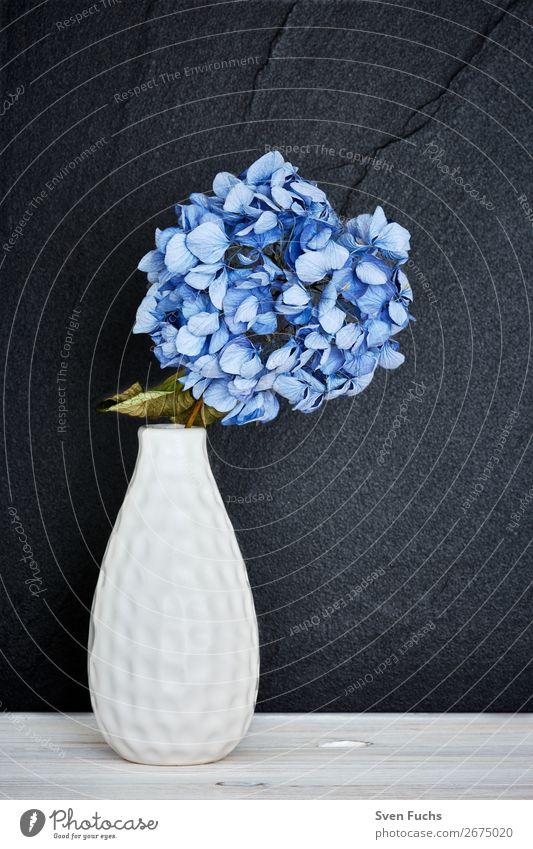 Blaue Hortensie in einer Vase schön Leben Dekoration & Verzierung Hochzeit Natur Pflanze Frühling Blume Blatt Blüte Blumenstrauß Liebe frisch weich blau grün