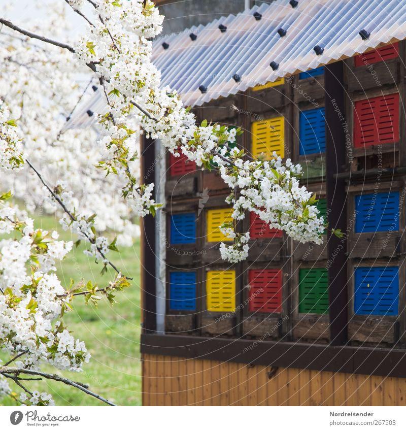 Kurze Transportwege Natur Baum Pflanze Farbe Tier Leben Frühling Blüte Arbeit & Erwerbstätigkeit Lebensmittel Freizeit & Hobby frisch Fröhlichkeit Ernährung