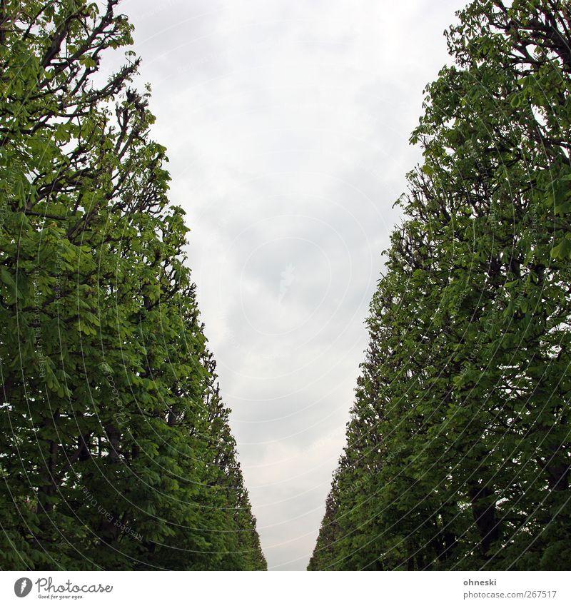 Ab durch die Hecke Natur Himmel Wolken Pflanze Garten Park Ordnung Farbfoto Gedeckte Farben Außenaufnahme abstrakt Menschenleer Textfreiraum Mitte
