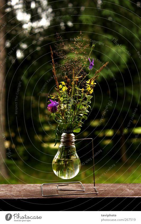 seltsame Vase schön Berge u. Gebirge Kunst Kunstwerk Natur Pflanze Blume ästhetisch dunkel einzigartig Originalität wild grün Design merkwürdig Lodge
