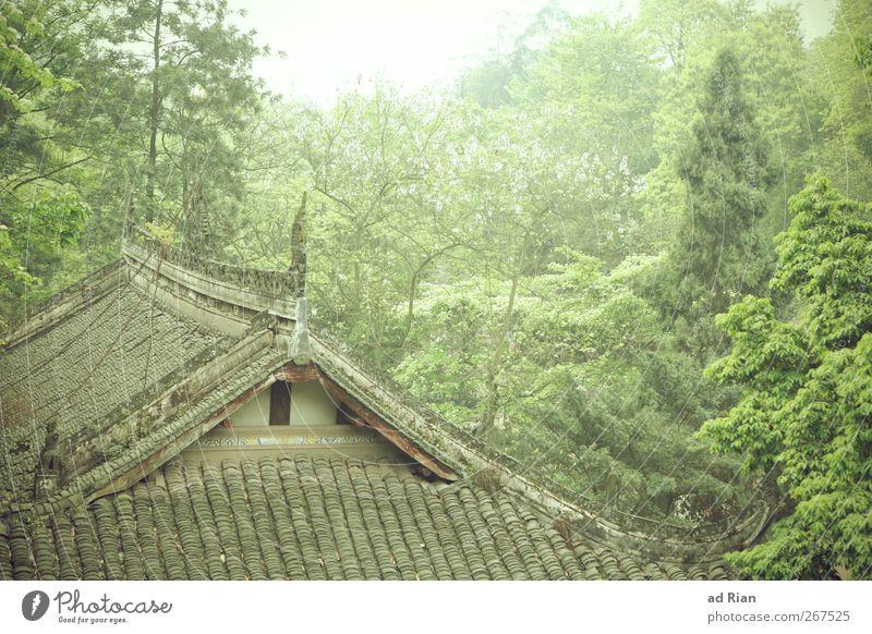 baumhaus Natur Tier Frühling Pflanze Baum Sträucher Wald Hügel China Xi'an Dorf Altstadt Menschenleer Einfamilienhaus Hütte Gebäude Architektur Mauer Wand