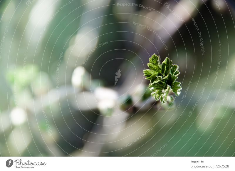 Frühlingshaft Natur grün schön Pflanze Blatt Stimmung natürlich Beginn frisch Wachstum leuchten Grünpflanze