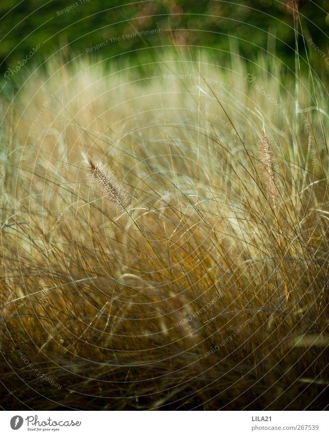 Natur grün Ferien & Urlaub & Reisen Pflanze Sommer gelb Herbst Frühling Gras Freiheit Garten Park Erde gold Feld Ausflug