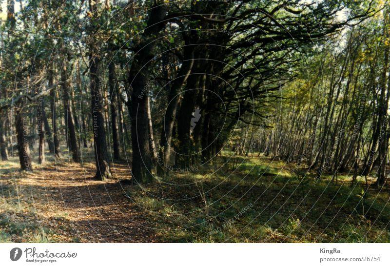 gabelung Baum grün Wald Schönes Wetter Bogen gekrümmt
