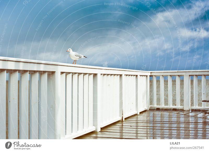 Natur Ferien & Urlaub & Reisen blau Wasser Sommer Sonne Tier Strand Küste Vogel Regen Wetter Luft Wildtier Wellen Tourismus
