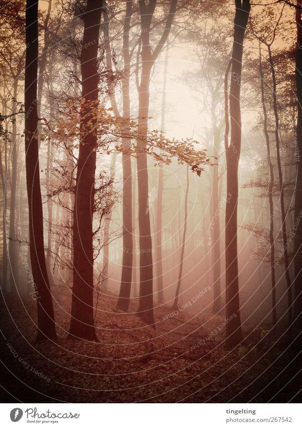 nebula I Natur Erde Herbst Nebel Baum Blatt Wald atmen beobachten leuchten verblüht Wachstum dunkel fantastisch natürlich Wärme braun gelb gold schwarz