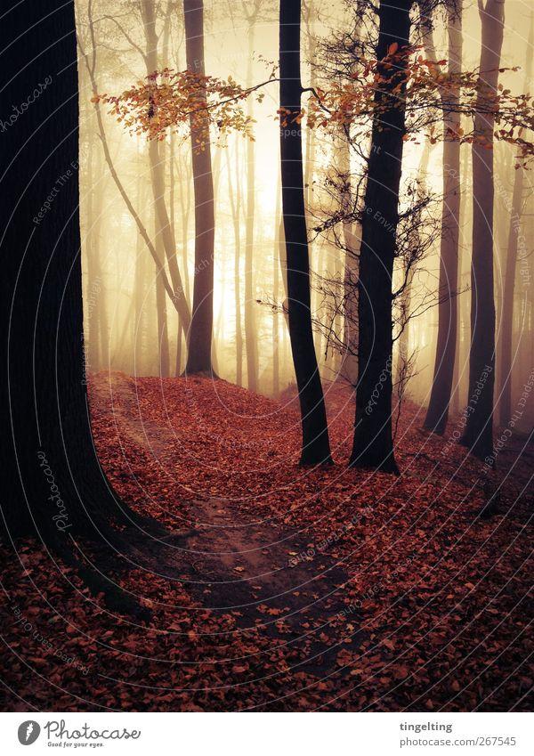 nebula II Natur Baum rot Blatt schwarz gelb Landschaft Herbst Wärme Luft braun Erde gold Nebel wandern frei