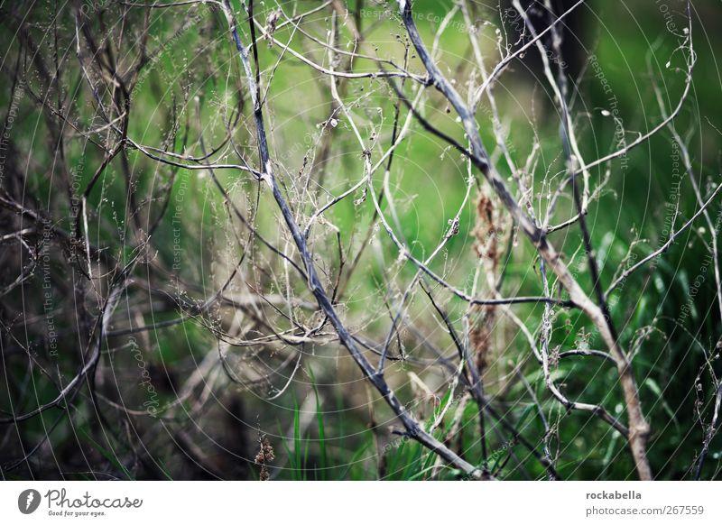 netzwerk. Umwelt Natur Pflanze Gras Sträucher Moos Grünpflanze grün Gedeckte Farben Außenaufnahme Menschenleer Schwache Tiefenschärfe