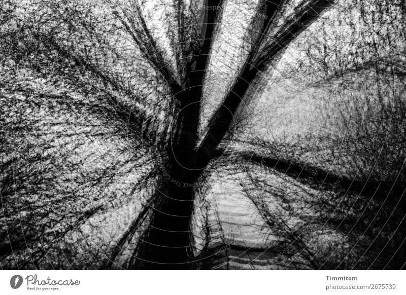 Kahle Eiche, schwarz-weiß Umwelt Natur Pflanze Himmel Herbst Winter Baum Wald ästhetisch außergewöhnlich dunkel grau Gefühle kahl laublos Doppelbelichtung