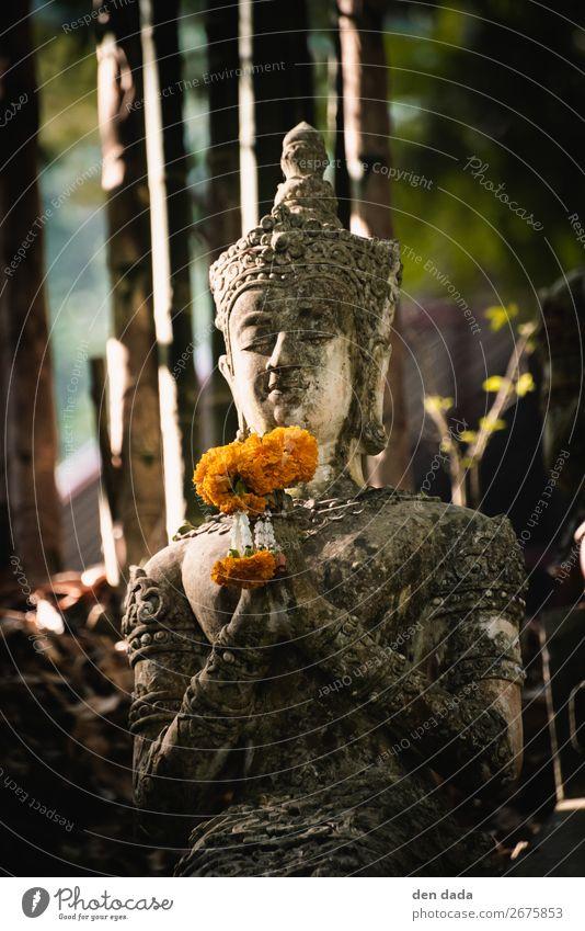 Wat Pha Lat Kloster Kunst Skulptur Natur Blüte Chiangmai Garten Sehenswürdigkeit Stein ästhetisch orange Glück Zufriedenheit Glaube Gelassenheit Tourismus Blume